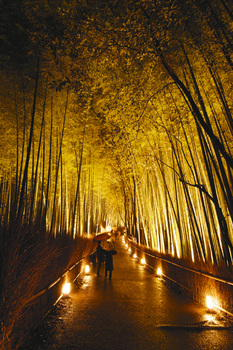 kyoto light up.jpg