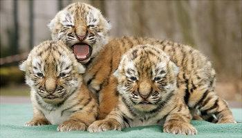 threel_baby_animal_.jpg